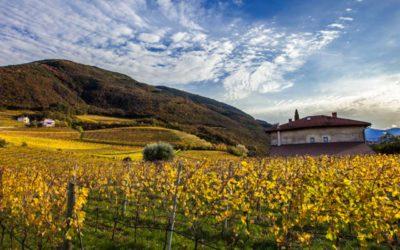 Bellaveder - Movimento Turismo del Vino Trentino Alto Adige