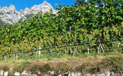 Cantina Aldeno - Movimento Turismo del Vino Trentino Alto Adige