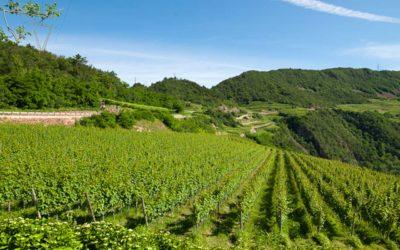 Cantina La-Vis - Movimento Turismo del Vino Trentino Alto Adige