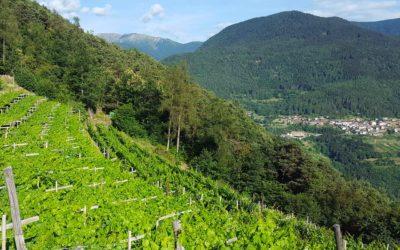 Cembra - Movimento Turismo del Vino Trentino Alto Adige