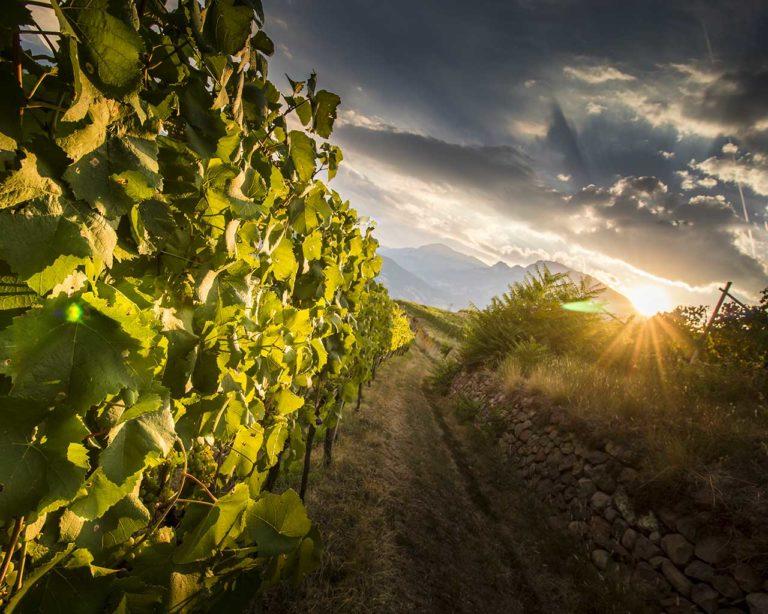Ferrari Trento - Movimento Turismo del Vino Trentino Alto Adige