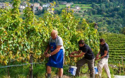 Gaierhof - Movimento Turismo del Vino Trentino Alto Adige