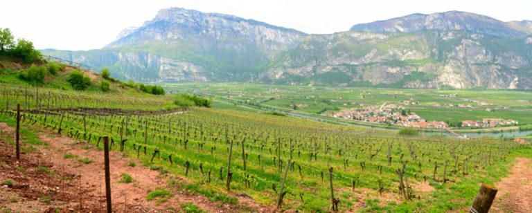 Maso Grener - Movimento Turismo del Vino Trentino Alto Adige