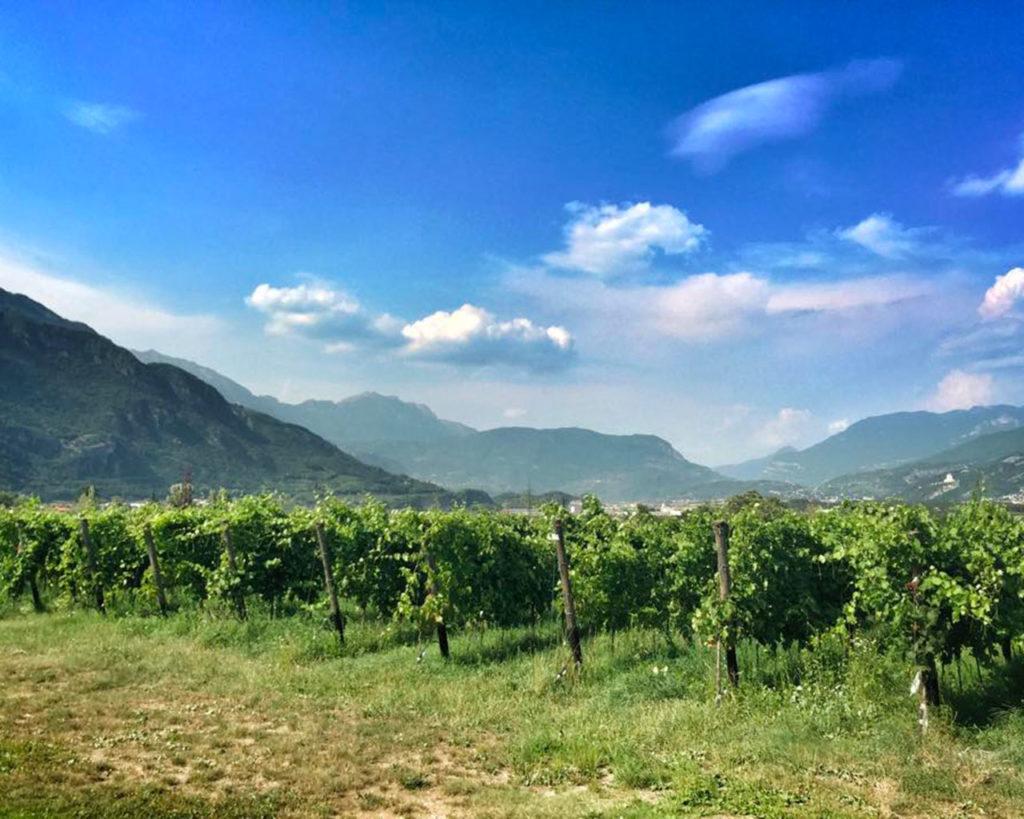 Cantina Mori Colli Zugna - Movimento Turismo del Vino Trentino Alto Adige