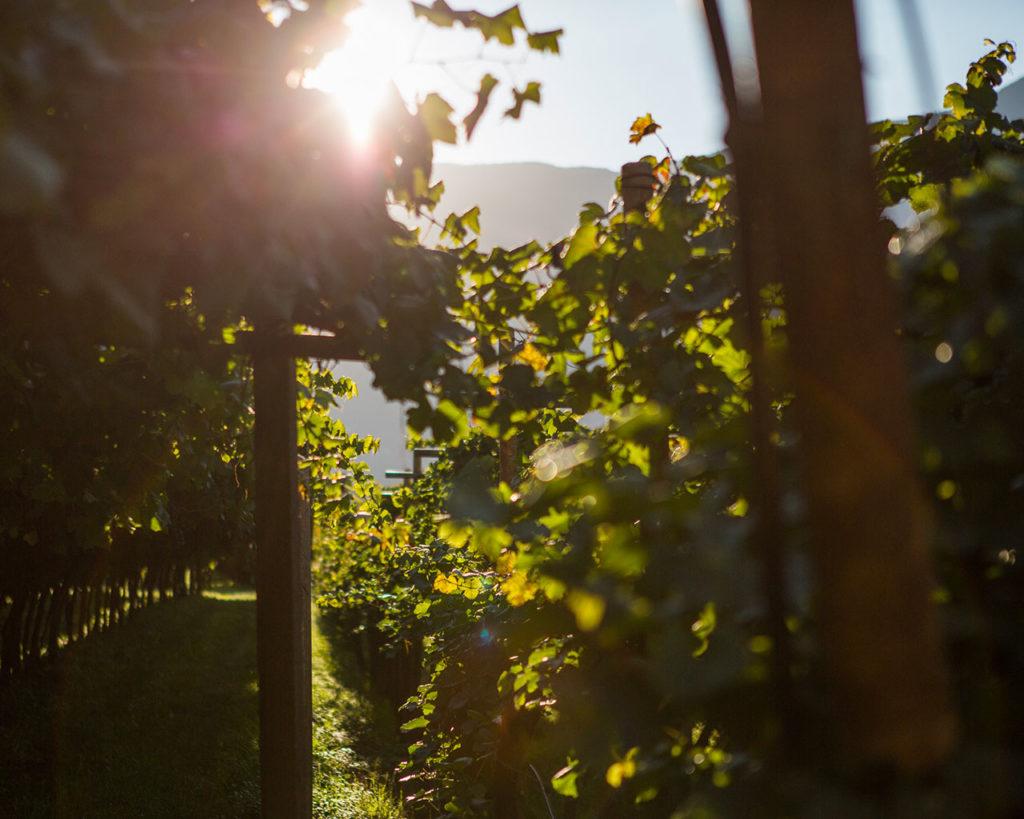 Roveré della Luna - Movimento Turismo del Vino Trentino Alto Adige