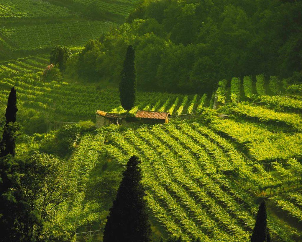 Vivallis - Movimento Turismo del Vino Trentino Alto Adige