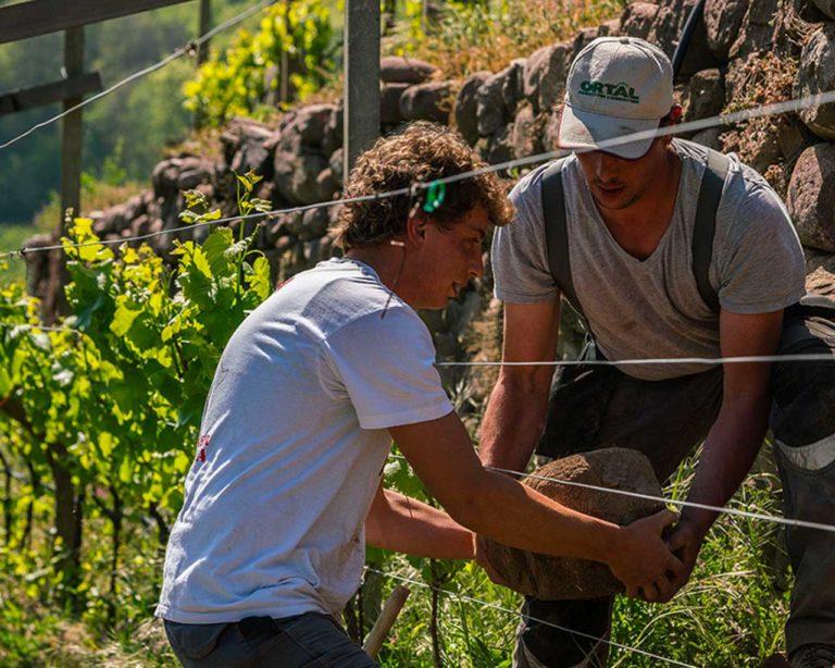 Corvée - Movimento Turismo del Vino Trentino Alto Adige